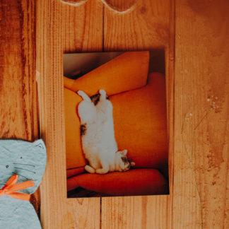 śpiący kot na żółtym fotelu z ikei