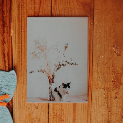biało czarny kociak z suszonymi kwiatkami pocztówka
