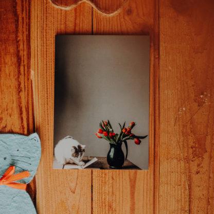 biało bury kot na stole, z książką i czerwonymi kwiatami tulipanami