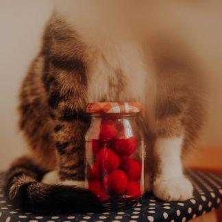 zabawka dla kota czerwona kropka
