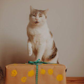karton urodzinowy dla kociarzy
